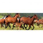Horses Running Through Pasture